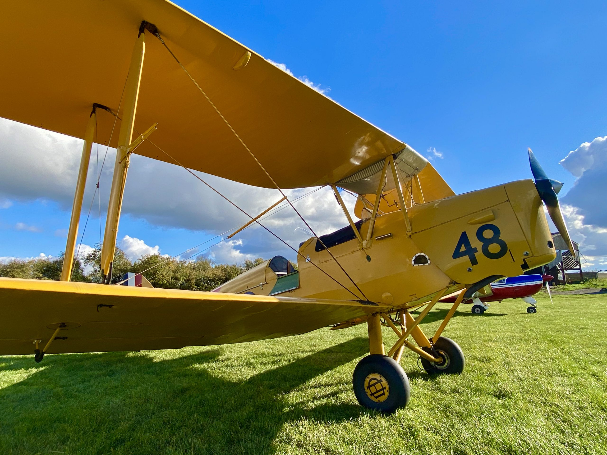 Yellow Tiger Moth Flying